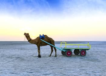 Gujarat Desert Beach Tour Package